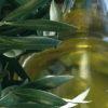 Entre olivos y almendros