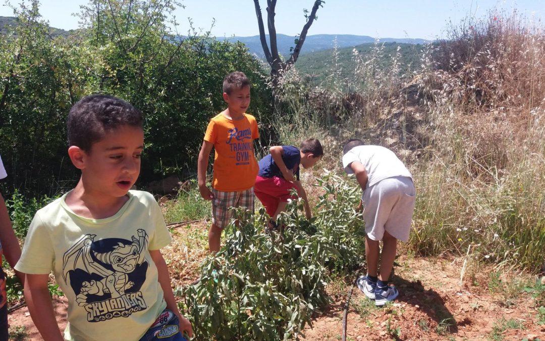Huertos escolares ecológicos Agujama