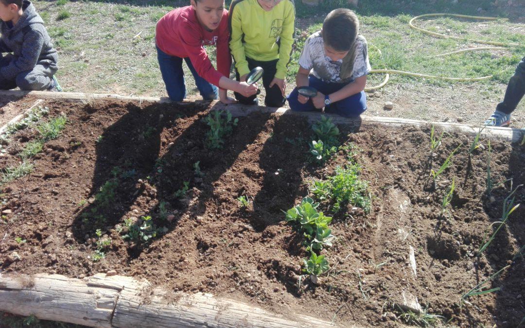 Huertos escolares ecológicos en abril