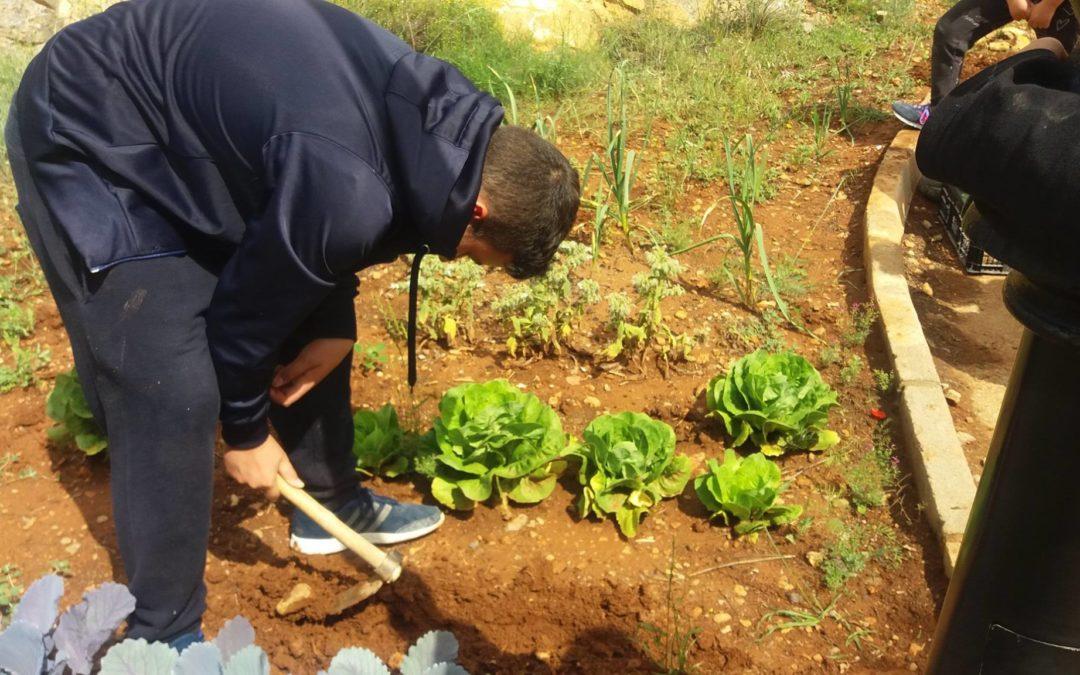 Fin de curso de los Huertos escolares ecológicos en las 3 provincias aragonesas