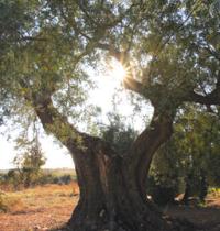 Pon Aragón en tu  escuela en las comarcas de Tarazona y el Moncayo y campo de Borja