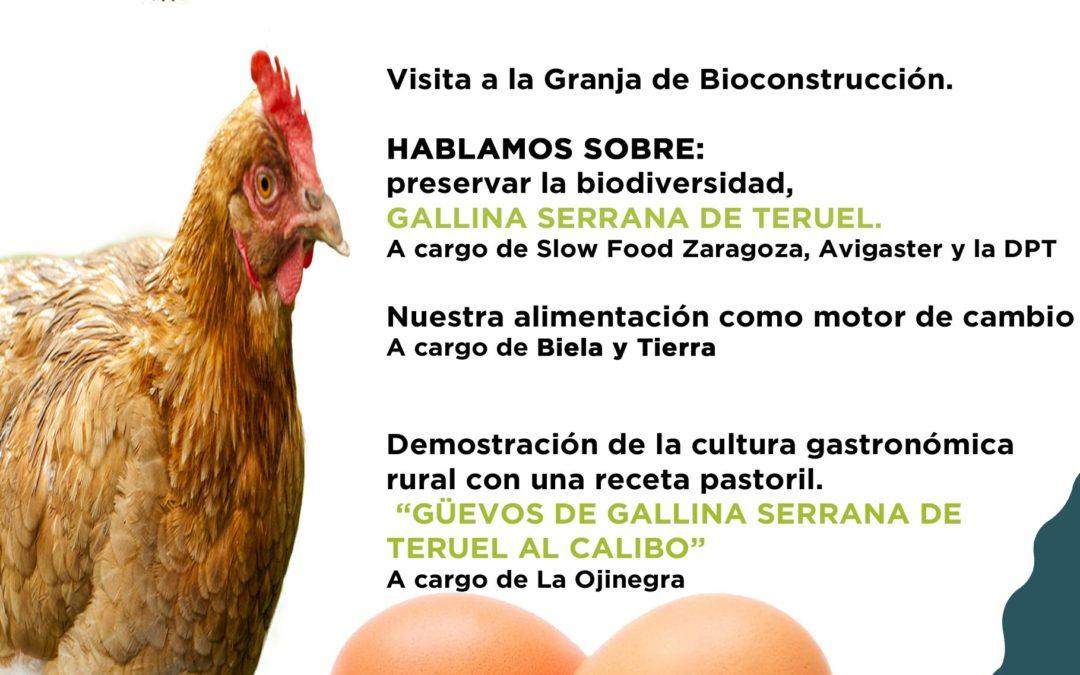 Nueva agroexperiencia en Villel, Huevos La Brizna, Mercado Local y Agroecológico Norte Teruel