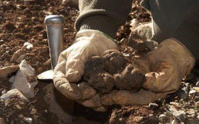 Codornices rellenas de patamulo trufa y patatas a la canela